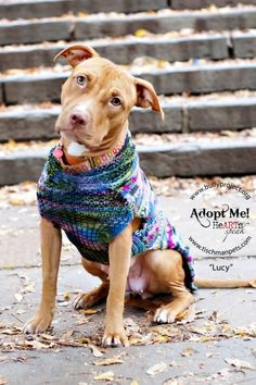 Meet Lucy, a Petfinder adoptable Pit Bull Terrier Dog | New York, NY | BREAKING NEWS: Bully Project can now introduce a very special lady that has been laying low for...