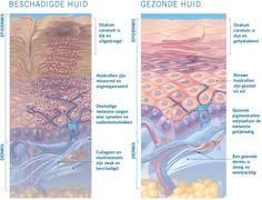 Hoe veroudert uw huid