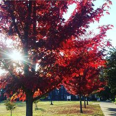 Please stick around a little longer, fall color. #murrayky Photo: @robert_a_gomez