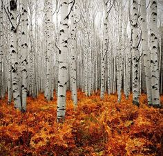 This image captures the principle of contrast. The picture contains elements of nature that are similar, however it also contains a contrast in color. The trees are painted in a grey scale and are greatly contrasted by the warm colors that are used for the underbrush.