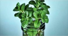 Xarope caseiro de hortelã para eliminar rapidamente tosse, gripe e todo o catarro dos pulmões! | Cura pela Natureza