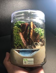 Moss terrarium that brings greenery to your home or office desk. Moss Terrarium, Singapore, Greenery, Gardening, Nature, Naturaleza, Lawn And Garden, Nature Illustration, Off Grid