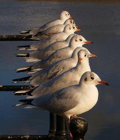 Bideford Gulls. Made me smile.