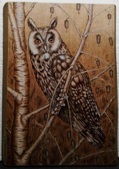 Long-eared Owl, Pyrography by Carlo Ferrario.