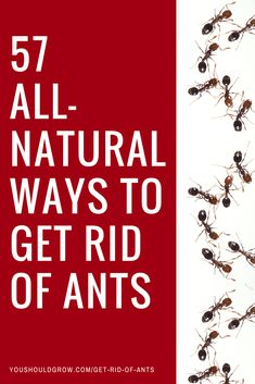 Fire ants can be a real problem in the garden and in your home. Click to find out how to get rid of ants naturally without chemicals. #homesteading #naturalremedies #pestcontrol #ants #hacks #lifehacks