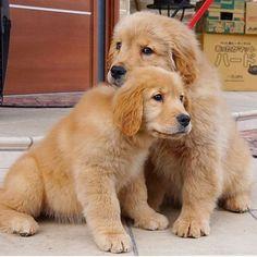 Puppy love ❤️❤️