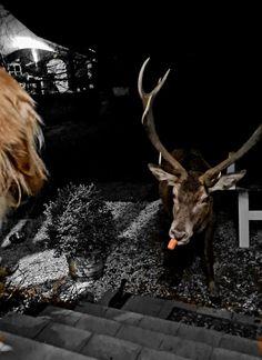 Norway, Moose Art, Island, Animals, Animales, Animaux, Islands, Animal, Animais