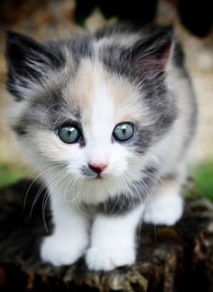 Well hello there little kitty!