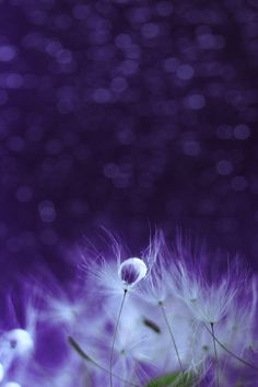 the sound of disco by Anastasia Ri on 500px