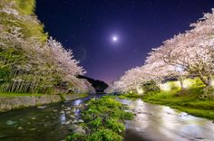 Photo by :Tommy Tsutsui Title: Moonlight and riverside cherry trees [Explore]. Explored 02-May-2014 (Highest Position #1) -- The cherry trees of Nakagawa-riverside, under the moon and starlit sky. Exposure 15 seconds / iso-640, this is 1 Raw-shot picture not doing the synthesis. Also not HDR.)
