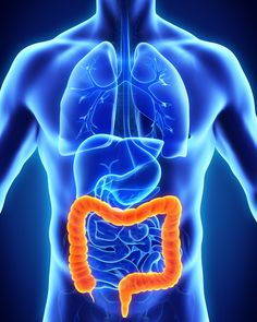 Cleanse The Colon with The Colon Hydrotherapy. Our colon, also known as the large intestine, plays a very important role in the digestion process. It absorbs nutrients and electrolytes and it collects r