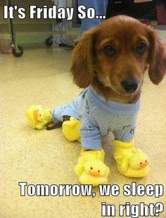 It's Friday So... Tomorrow, we sleep in right? RIGHT!!