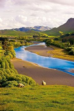 #Sheep Grazing, New #Zealand
