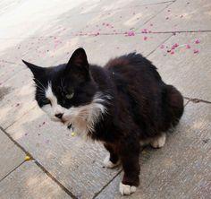 猫ちゃん、お昼ごはんは何を食べたいですか?トウモロコシいいですか?(・・・・・・)無視された気がした!自然な、素敵な、綺麗な写真を撮るために、スマイル!Engaging in self-amusement of my own! In Mount Tai.
