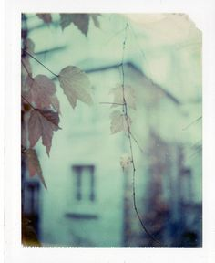 Autumn leaves by emilie79* @flickr