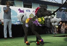 PICTURES | All the fabulous frocks and fur at the Spitalfields Paw Pageant #dog #dogs #dogshow #puppy #humor #humour #funny #london #even #london #fashion #style