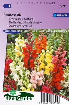 Muflier des Jardins demi-naine Rainbow mix