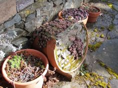 I Need A Cup of Tea: New Digs: Pots for Hope