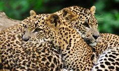 Sri Lanka's best wildlife National Parks   Destinations   Wanderlust