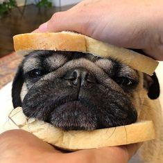 A cute sandwich