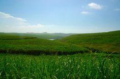 The sugar cane fields surrounding Sugar Bay camp. Beautiful Creatures, Fields, Scenery, Ocean, Camping, Sugar, Mountains, Beach, Nature