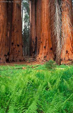 Sequoia National Park - California
