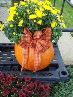 Pumpkin Mum!!!