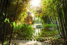 Bamboo Walkway at the Huntington Gardens in Pasadena, California