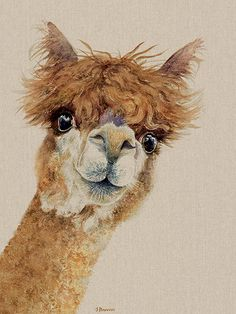 Jane Bannon Wendy alpaca country animal watercolour painting Head to to view all canvas art prints and wooden blocks available in Jane s open edition wall art collection brought to you by The Art Group Animal Paintings, Animal Drawings, Art Drawings, Face Paintings, Watercolor Animals, Watercolor Art, Watercolour Paintings, Alpacas, Alpaca Drawing
