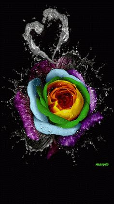 everyday a different color, beautiful gifs, soft goth, nature. I hope you'll find images here for your taste too. Roses Gif, Flowers Gif, Beautiful Rose Flowers, Beautiful Gif, Beautiful Flowers, Beautiful Pictures, Ps Wallpaper, Butterfly Wallpaper, Gif Bonito