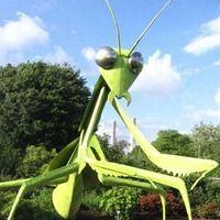 Columbus, OH - Giant Praying Mantis