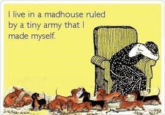 This used to be me.  I had 8 dachshunds, all family!