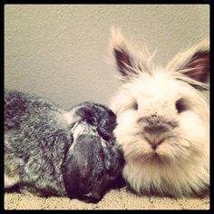 Bunny Snuggles - September 22, 2011