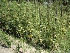 Čo s čím sadiť alebo BIO bez veľkej námahy Planting Seeds, Garden Beds, Gardening, Plants, Lazy, Ideas, Compost, Lawn And Garden, Seed Starting
