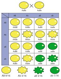 Pin En Adn Y Los Cromosomas