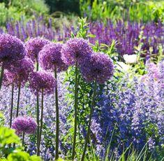 Deer Resistant Garden, Deer Resistant Perennials, Smooth Hydrangea, Hydrangea Paniculata, Garden Online, Smart Garden, Heuchera, Shade Plants, Garden Planning