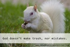 Some days we feel like no one would miss us if we just disappeared. Other days we are sure there isn't one thing right about us. Let the albino squirrel talk to your heart as it did mine. Know your value and worth because you know your Creator.  www.deeperstillministries.com Going Deeper Still with your thoughts