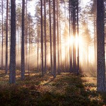 Fototapeta - The Enchanted Forest
