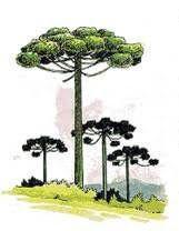 Rio Grande Do Sul, Urban Sketching, Tree Art, Sacred Geometry, Pin Collection, Tatoos, Exotic, Watercolor, Drawings