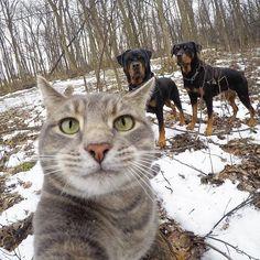 Aquí, con mis guardaespaldas - Manny el gato selfie