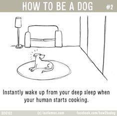 How To Be A Dog   Last Lemon
