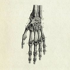 All these images are sources of inspiration on the theme of hands in art and are references for my work as an artist. Bone Drawing, Figure Drawing, Hand Reference, Anatomy Reference, Skeleton Anatomy, Human Anatomy Art, Drawing Sketches, Drawings, Skull And Crossbones