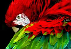 fotografia artistica animales - Buscar con Google