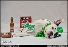 St. Patties dog has had one too many. :-) Love this photo? Re-pin it!