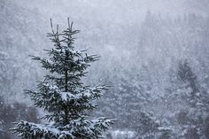 Let it snow <3 (Explored) | Flickr - Photo Sharing!