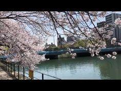 さくら満開 広島市南区猿猴橋町 猿猴川東部河岸緑地 2021年3月31日 - YouTube Hiroshima, Japan, Japanese
