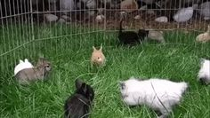 Cats think they are bunnies    #gifs  #cute #cats #funnyanimals #lolgifs #funnygifs #lol #funny #funnyStillcracking