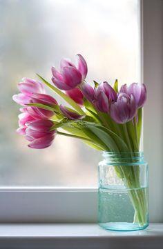 Tiffanys Tulips - Fine Art Photography - Art Print - Spring Flowers - Corinne Lavinio - Still life photography