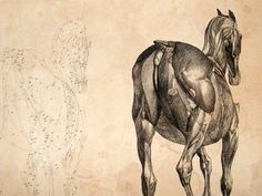 George Stubbs  Anatomy of the Horse  1766