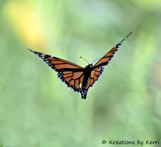 A Little Piece of Me: Monarch Butterfly In Flight - A Simple Blessing